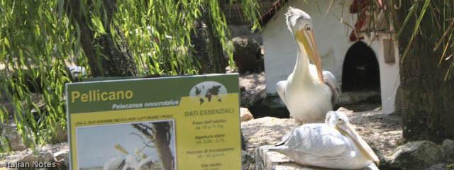 The secret zoo near Manduria