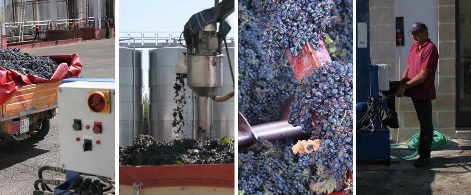 Primitivo vinification