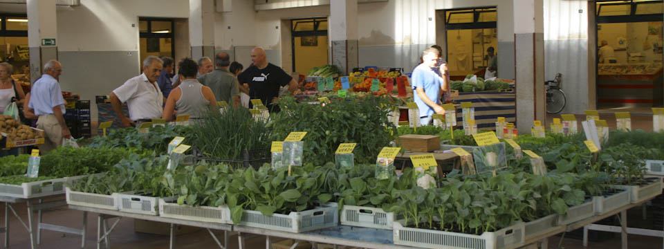 Food shopping in Emilia-Romagna